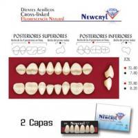 NEWCRYL-VITA 32L Upper D3 Teeth Img: 201807031