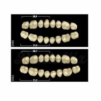 GNATHOSTAR A-D lower posterior teeth D82 - 1 C Img: 201905181