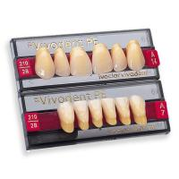 VIVODENT S PE lower front teeth A4 - A4 6C Img: 201906291