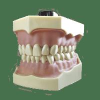TYPODONT MODEL FRASACO AG-3 Img: 202008291
