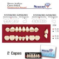 dientes newcryl 32m up b2