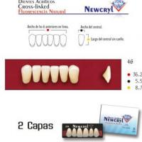 dientes newcryl a 25 up