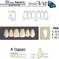 dientes steinvit n66 up
