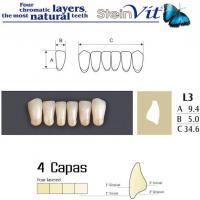 dientes steinvit L3 LO