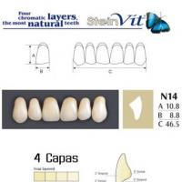 dientes steinvit n14 up