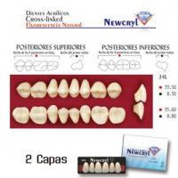 dientes newcryl 34l up a2