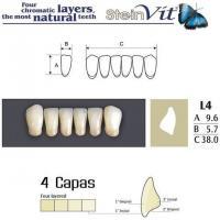 dientes steinvit L4 LO
